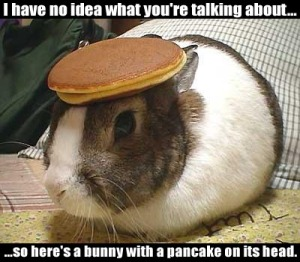 a bunny with a pancake on it's head!